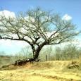 Biomas brasileiros: Degradação e problemas ecológicos Bioma: Caatinga A Caatinga é uma área de aproximadamente 826.411 quilômetros quadrados, localizada na região nordeste do Brasil. Abrange os Estados do Piauí, Ceará, […]