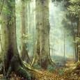 As florestas cobrem 31% de toda a área terrestre do planeta e têm responsabilidade direta na garantia da sobrevivência de 1,6 bilhões de pessoas e de 80% da biodiversidade terrestre. […]