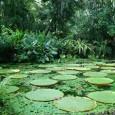 Contribuições das Unidades de Conservação para a economia brasileira. Entre os benefícios estão o aumento de visitantes a parques nacionais, a economia no tratamento de água e a arrecadação de […]