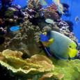 Um novo estudo indica que os ecossistemas marinhos enfrentam perigos ainda maiores do que os estimados até agora pelos cientistas e que correm o risco de entrar em uma fase […]