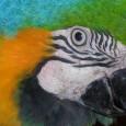 Duas espécies são da Venezuela e, caso não seja encontrado criadouro provisório no País, serão mortas. As 270 aves da Venezuela apreendidaspela Polícia Federal no início da semana no Aeroporto […]