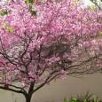 Carolina Spillari – O Estado de S.Paulo As árvores mais antigas do mundo ajudam a entender o clima do Planeta. Estudos no Brasil e no exterior revelam que é possível […]