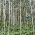 Florestas estão mais densas em 45 dos 68 países analisados; para Greenpeace, resultado é consequência da monocultura de eucalipto estadao.com.br Uma matéria do jornal britânico The Independent revela que a […]