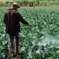 Em meados da década de 1960, em nome da chamada modernização da agricultura, o Estado ofereceu aos produtores rurais um farto volume de créditos subsidiados que, no entanto, vinham intimamente […]