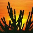 A Caatinga teve 1.921 km² de sua floresta desmatada no período de 2008-2009, segundodados do Centro de Sensoriamento Remoto do Ibama. O ritmo anual de desmamento diminuiu. Enquanto de 2002 […]