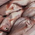 Com a água de nascentes recém-recuperadas e tanques de peixes, que a equipe do JORNAL DO OESTE avistou uma propriedade diferente das demais que a cercam. Há poucos quilômetros […]
