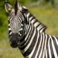 Bancos internacionais, organismos das Nações Unidas e organizações intergovernamentais prometem apoiar o desenvolvimento sustentável do turismo em uma rede de parques que se estende por dez paises da África Ocidental.O […]