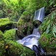 As florestas mundiais têm um papel maior do que se imaginava no combate à mudança climática, disseram cientistas no mais abrangente estudo já realizado a respeito da capacidade de absorção […]