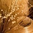O Instituto Nacional da Propriedade Industrial (Inpi) aprovou nesta terça-feira (12) o primeiro pedido de indicação geográfica (IG) de artesanato brasileiro, referente a trabalhos manuais confeccionados em capim dourado na […]