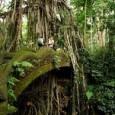 Populações indígenas e comunidades locais demonstraram ser melhores administradoras que o Estado onde o controle das áreas de floresta foi concedido a elas. Uma nova pesquisa publicada nesta terça-feira, 12, […]