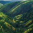 As árvores removem da atmosfera 2,4 bilhões de toneladas de carbono por ano Pesquisa: combater o desmatamento pode reduzir ainda mais gás carbônico da atmosfera do que se pensava(Stockbyte/ThinkStock) O […]