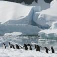 Especialistas afirmam que se dióxido de carbono continuar sendo emitido em grandes proporções, toda a camada de gelo pode derreter novamente. Foto: Getty Image Uma pesquisadora britânica afirmou que a […]