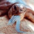 Em um ano de vigência da Lei 5.502/09, que desestimula o uso de sacolas plásticas no estado, a população fluminense deixou de consumir 600 milhões de sacolas. O número representa […]