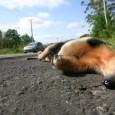 Um estudo sobre os animais silvestres que morrem atropelados nas estradas de São Paulo vem permitindo a pesquisadores da Universidade Estadual Paulista (Unesp), no campus de Botucatu, entender as […]