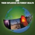 """A Organização para a Agricultura e Alimentação (FAO) lançou um relatório onde enfatiza que as florestas estão sofrendo ameaça crescente devido aos eventos meteorológicos extremos. """"Distúrbios abióticos e a sua […]"""