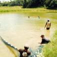 A ministra Ideli Salvatti diz ser incompreensível a aquicultura não ser a locomotiva da economia da região Em cinco anos, aAmazôniapode multiplicar por seis aprodução nacional de pescado. A afirmação […]