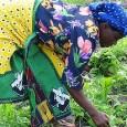 Os OGM são manipulados geneticamente, de modo a favorecer características desejadas, como a cor e tamanho A União Nacional de Camponeses (UNAC) não quer que Moçambique aceite a introdução da […]