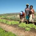 A definição, no novo Código Florestal, de normas especiais para agricultura familiar foi apoiada pelos ex-ministros do Meio Ambiente que participaram de debate nesta quarta-feira (24) no Senado. Marina Silva, […]