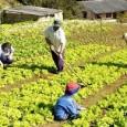 O novo espaço para práticas agropecuárias sustentáveis, inaugurado no último sábado (30), em Macaé, Norte Fluminense, fará do Estado um novo pólo de desenvolvimento rural. Situado uma fazenda com 140 […]