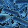 Bactérias transgênicas que suportam altas doses de mercúrio poderiam facilitar a limpeza de áreas contaminadas com o metal, afirmam cientistas da Universidade Interamericana do Porto Rico. Segundo o Pnuma (Programa […]