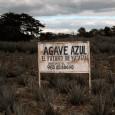 As plantas do gênero agave, encontradas em grande quantidade no México, são normalmente usadas para fazer o combustível que costuma animar festas no ritmo da salsa e do merengue: a […]