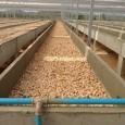 Os pellets são uma fonte de energia renovável que não necessita de nenhum tipo de aditivo nem cola pois a matéria que liga o pellet é a lignina proveniente da […]
