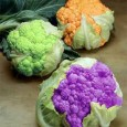 Atualmente, o que mais se fala (além do aquecimento global) é sobre alimentos geneticamente modificados, transgênicos. Mas, você sabe o que é isso? Bom, um organismo é considerado transgênico quando […]