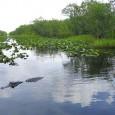 Os Estados Unidos anunciaram nesta quinta-feira que investirão US$ 100 milhões em acordos com rancheiros da Flórida para que eles se comprometam a cuidar de seus terrenos no Parque Nacional […]