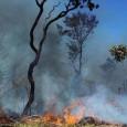 Incêndio próximo ao aeroporto atingiu área de 10 mil metros quadrados. Período de seca dificulta ação dos bombeiros no combate ao fogo. O Corpo de Bombeiros registrou 62 focos de […]