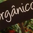 Famosos como a atriz Gwyneth Paltrow e o cantor Sting estão prejudicando a causa da culinária ecologicamente correta, segundo a presidente de uma organização britânica de defesa da alimentação orgânica. […]