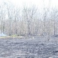 Segundo especialista, 'guardadas as devidas proporções, a perda da USP é a mesma que aconteceu com o Instituto Butantã' SÃO PAULO – Cerca de 30 hectares, do total de 75 […]