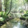 """Cientistas pedem 'cinturões verdes' para proteger florestas primárias. Artigo com brasileiro co-autor será publicado na Nature nesta quinta-feira. Estudo que será publicado nesta quinta-feira (15) na revista """"Nature"""" alerta sobre […]"""