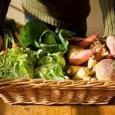 Em contraposição à alimentação fast food, a procura pela alimentação orgânica tem crescido consideravelmente em diversos países do mundo. Escândalos alimentares ocorridos na Europa nos anos 1980, o clima de […]