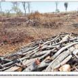 A crescente produção agropecuária do Cerrado tornou o Brasil um dos celeiros do mundo, mas 48,5% de sua mata nativa tinha desaparecido ao fim do ano passado, segundo o Ministério […]