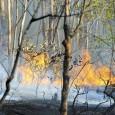 O fogo continua consumindo o Distrito Federal. Desde janeiro, as chamas já consumiram mais de 10 mil hectares, número maior do que o registrado em todo o ano passado, […]