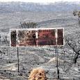 Não se sabe ainda o tamanho dos estragos causados pelo fogo. Mas será preciso, mais do que nunca, contar com a capacidade de renovação do cerrado. Em dois dias de […]