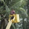 A praticamente desconhecida ilha de Toquelau, no território da Polinésia, será abastecida com eletricidade gerada por 93% de luz solar e o restante com óleo de coco. O plano, anunciado […]
