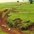 O avanço da agricultura brasileira requer políticas para ampliar o uso de inovações científicas e tecnológica pelos agricultores, especialmente os pequenos, na opinião de Elíbio Rech Filho, membro da Academia […]