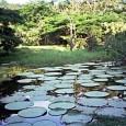 O cientista Dennis McKenna já perdeu as contas de quantas vezes foi à Amazônia, mas garante que a maior floresta tropical do mundo continua a ser um grande mistério para […]