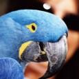 No dia 21 de setembro de 2000, o então presidente Fernando Henrique Cardoso assinou o Decreto n° 3.607, que designou o Instituto Brasileiro do Meio Ambiente (Ibama) como autoridade administrativa […]