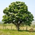Em comemoração ao Dia da Árvore (21 de setembro), a Secretaria de Estado de Meio Ambiente (Sema), por meio da Superintendência de Educação Ambiental; o Centro das Indústrias Produtoras e […]