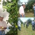 A Cutrale, uma das maiores empresas de suco de laranja do mundo, vai definir até março de 2012 o volume de recursos necessários para iniciar o cultivo e o processamento […]