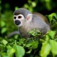 Análise de ambientalistas mostra que crescimento de vegetação após desmatamento não recupera número de espécies. Brasil é destaque Uma análise abrangente de 138 estudos publicada no periódico Nature nesta quarta-feira […]