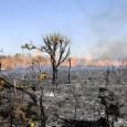 Bioma é um dos mais ameaçados do país e já perdeu 48,5% da cobertura original – quase 1 milhão de km². A taxa anual de desmatamento do Cerrado, que era […]