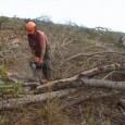 Prometido há um ano pelo governo, o sistema de detecção do desmatamento no cerrado em tempo real, usando imagens de satélite, ainda não saiu do papel. Ele seria feito pelo […]