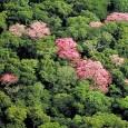 Dados do Ibama apontam que 1.079 árvores ainda podem estar ameaçadas de extinção Com a chegada da Primavera, nesta sexta-feira (23), o Ibama (Instituto Nacional de Meio Ambiente e Recursos […]