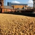 Maior cooperativa agrícola da América do Sul, a Coamo, com sede em Campo Mourão, no noroeste do Paraná vai converter quase toda sua área plantada de soja e milho em […]