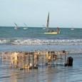 Tubarões, arraias e peixes-boi correm risco de desaparecer por causa da pesca excessiva. As águas brasileiras têm arraias-jamanta de até 2 toneladas, tubarões-baleia de cerca de 20 metros epeixes-boi de […]
