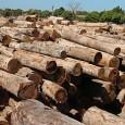 Pela primeira vez na história do país o Governo Federal decide investir recursos financeiros na melhoria do uso dos fornos de carvão e de lenha para combater a desertificação e […]