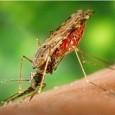 Os casos de malária registrados na Amazônia Legal caíram 31% nos primeiros seis meses deste ano em relação ao mesmo período do ano passado. Dados divulgados nesta segunda-feira, 5, pelo […]